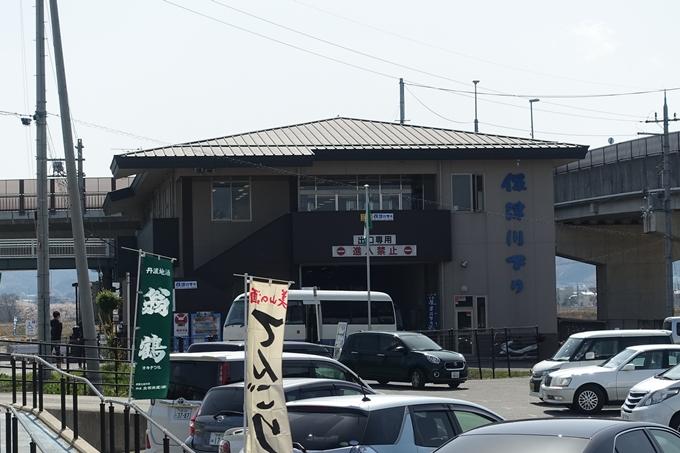 京都桜速報2018_16 No8