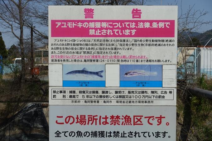 京都桜速報2018_16 No14