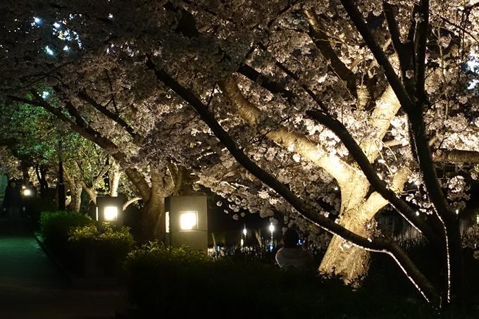 京都桜速報2018_18 No4