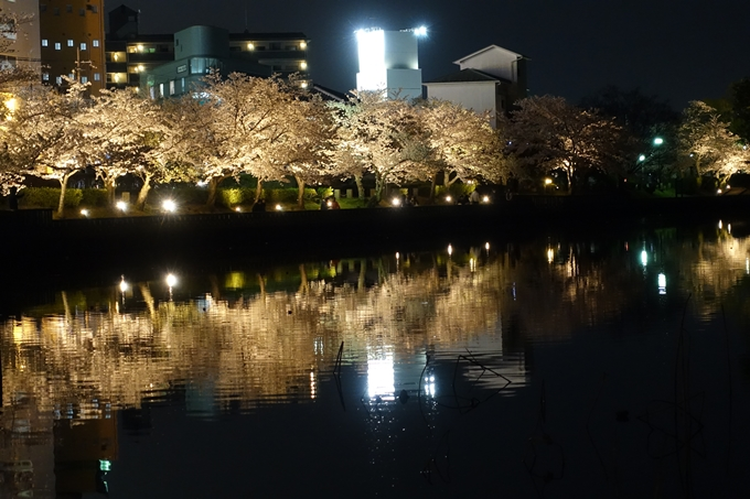 京都桜速報2018_18 No8