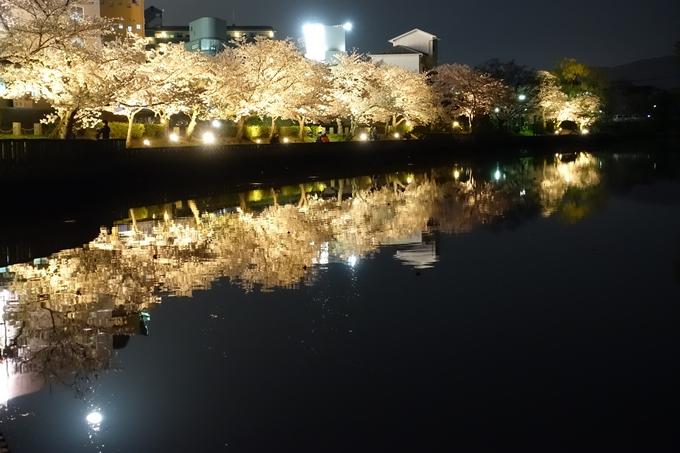 京都桜速報2018_18 No10