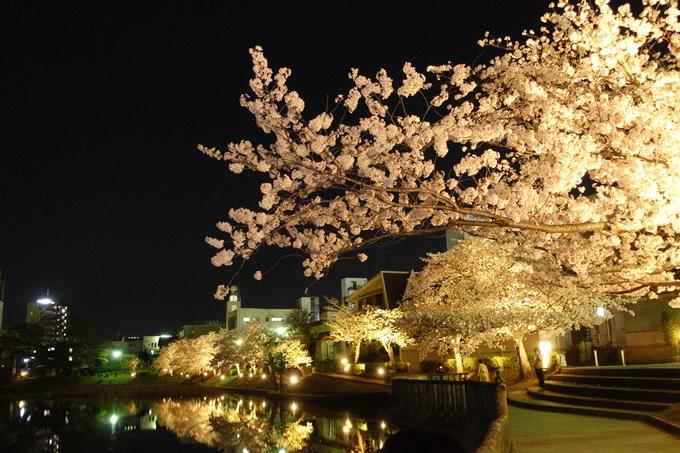 京都桜速報2018_18 No14