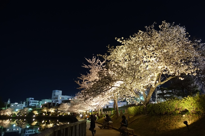 京都桜速報2018_18 No15