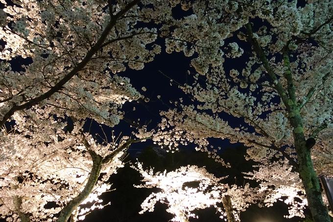 京都桜速報2018_18 No17