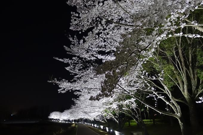 京都桜速報2018_19 No14