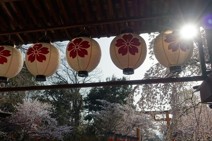 京都桜速報2018_14 No15