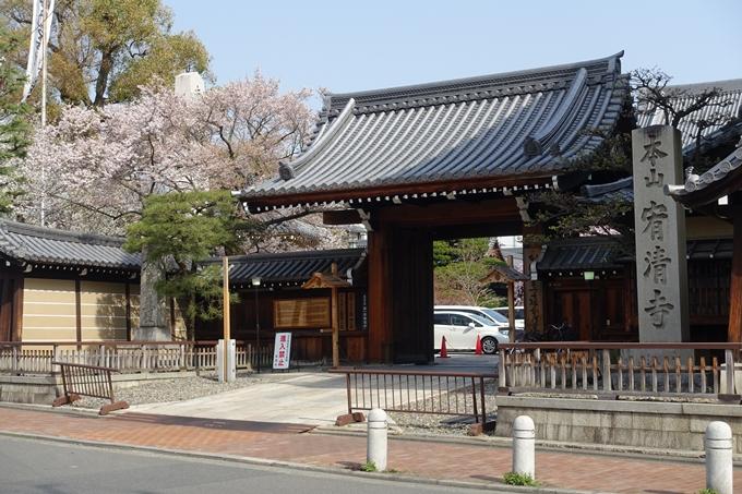 京都桜速報2018_14 No17