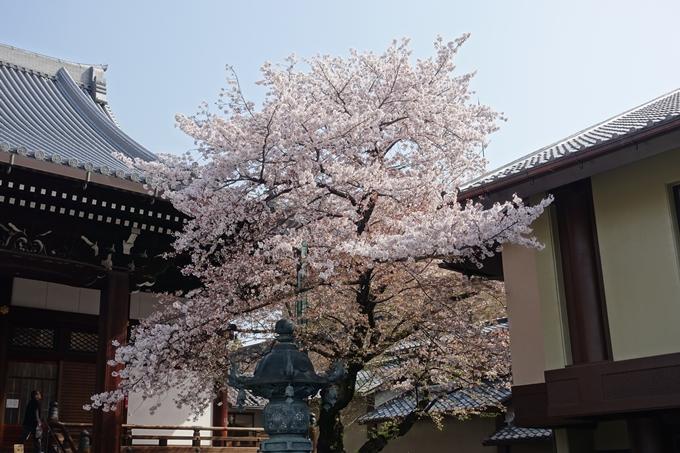 京都桜速報2018_14 No18