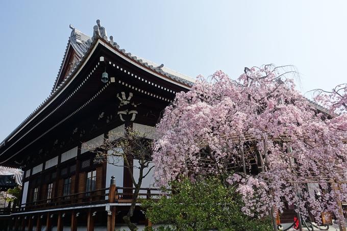 京都桜速報2018_14 No21