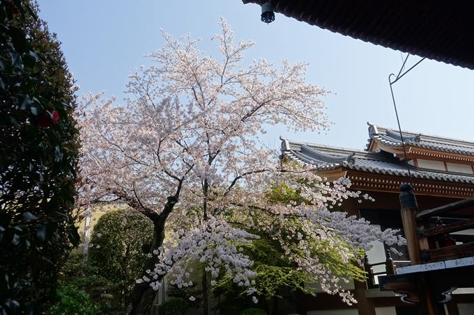 京都桜速報2018_14 No25