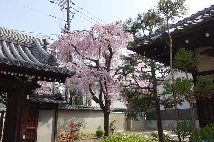 京都桜速報2018_14 No29