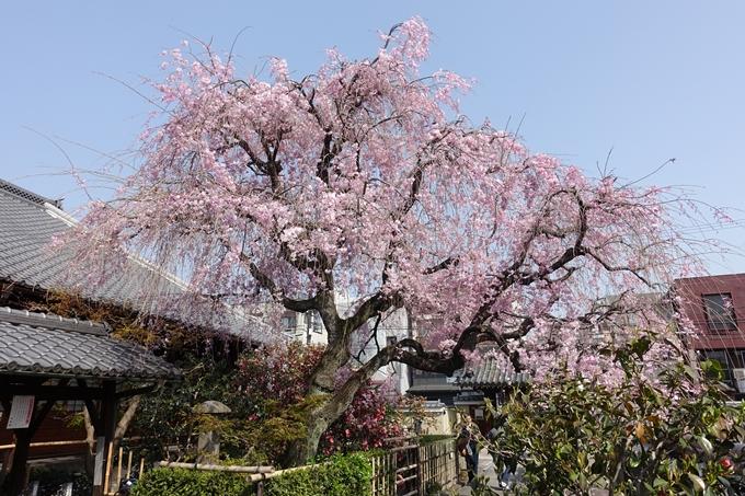京都桜速報2018_14 No34