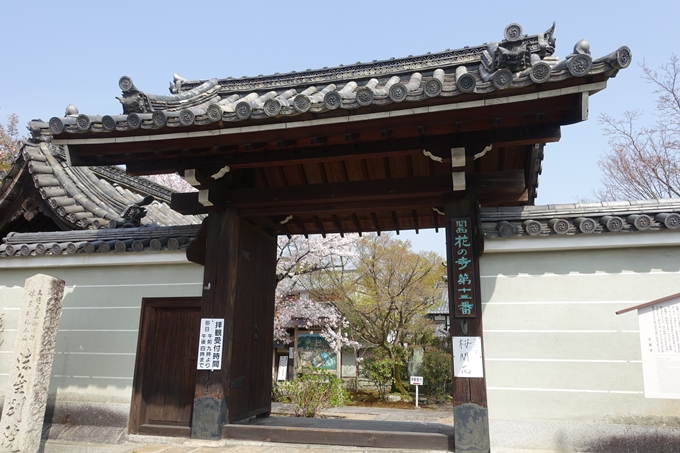 京都桜速報2018_14 No39