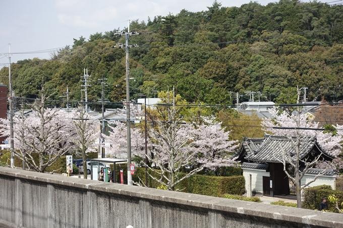 京都桜速報2018_14 No59