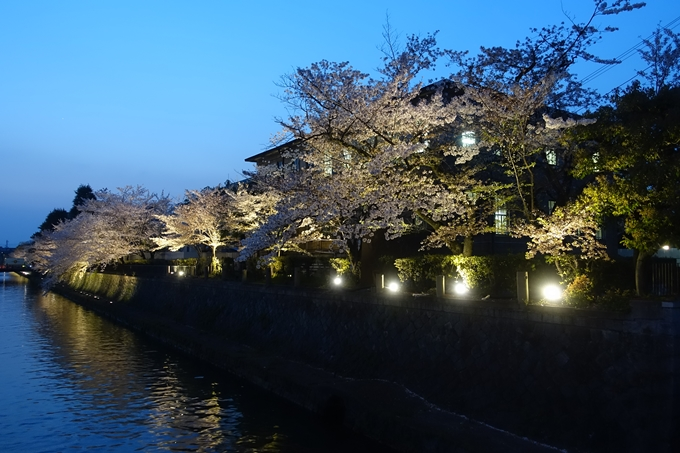 京都桜速報2018_17 No2