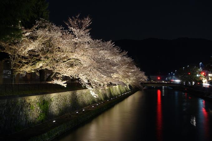 京都桜速報2018_17 No9