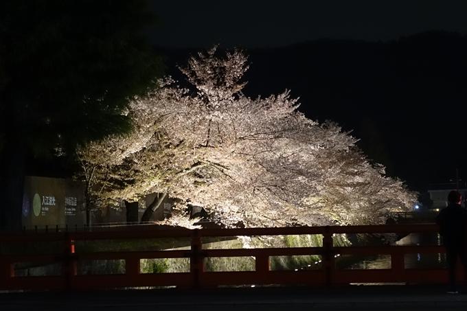 京都桜速報2018_17 No12