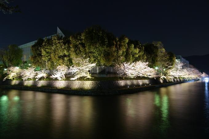 京都桜速報2018_17 No18