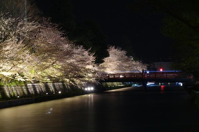京都桜速報2018_17 No20