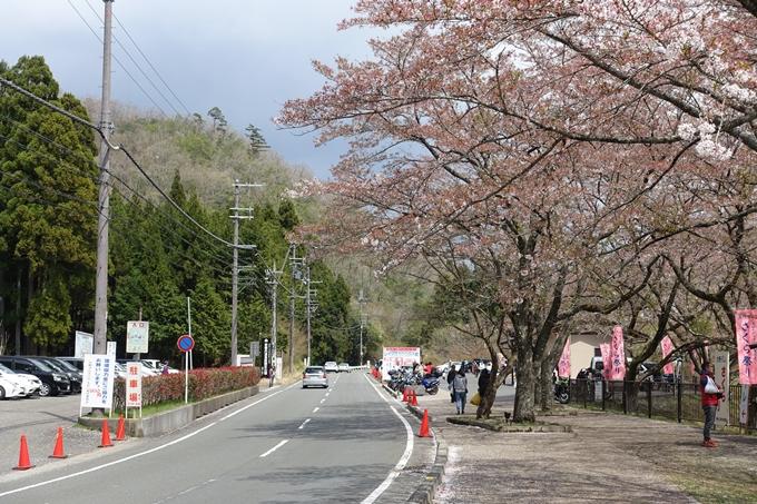 京都桜速報2018_23 No22