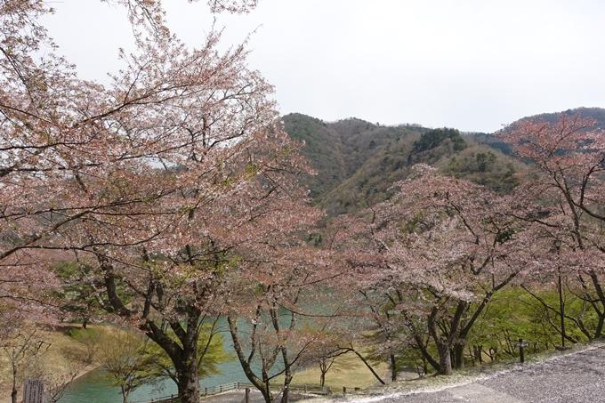 京都桜速報2018_23 No25