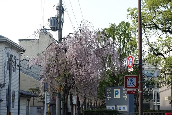 京都桜速報2018_24 No22