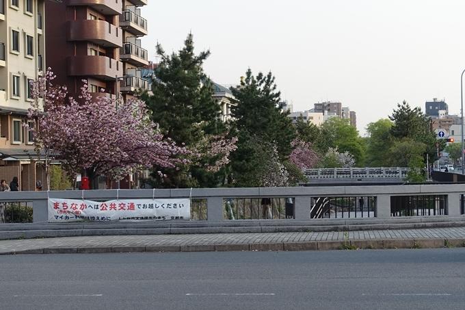 京都桜速報2018_25 No2