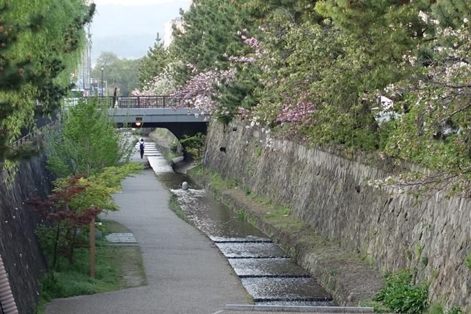 京都桜速報2018_25 No6
