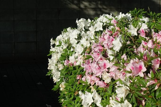 錦林車庫つつじ No8