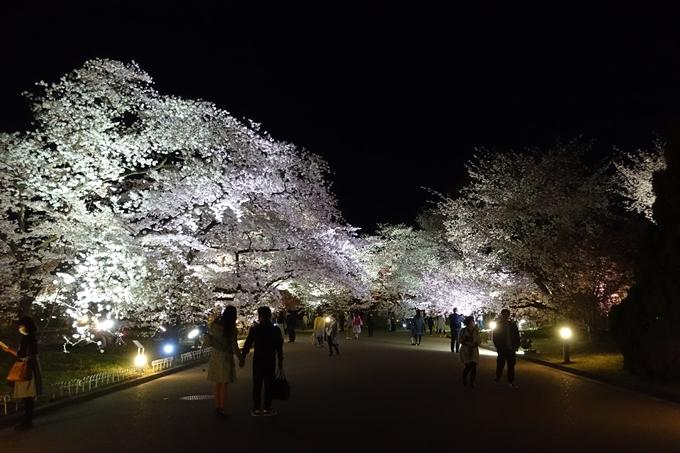 京都桜速報2018_21 No39