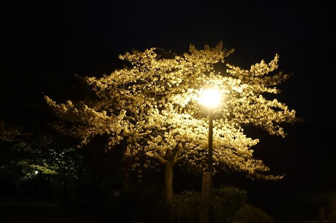 京都桜速報2018_20 No3