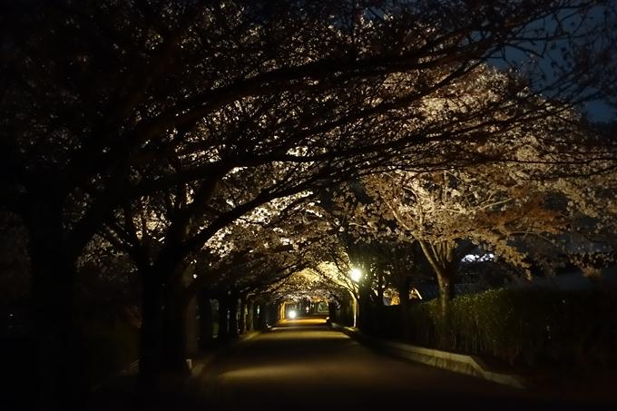 京都桜速報2018_20 No7
