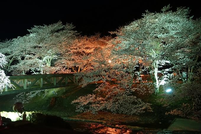 京都桜速報2018_20 No15