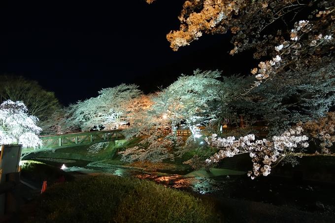 京都桜速報2018_20 No16