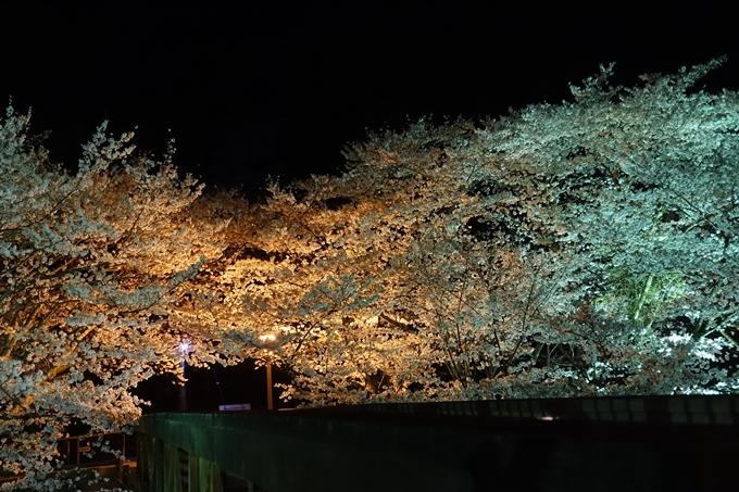 京都桜速報2018_20 No19