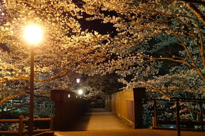京都桜速報2018_20 No27