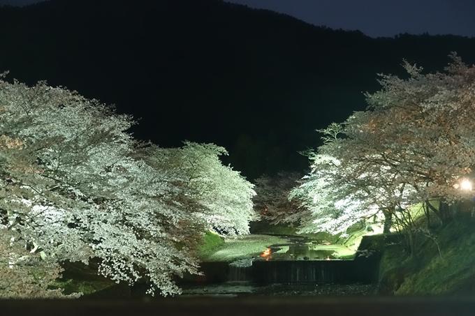 京都桜速報2018_20 No30