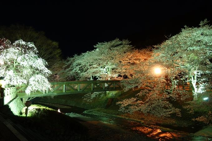 京都桜速報2018_20 No31