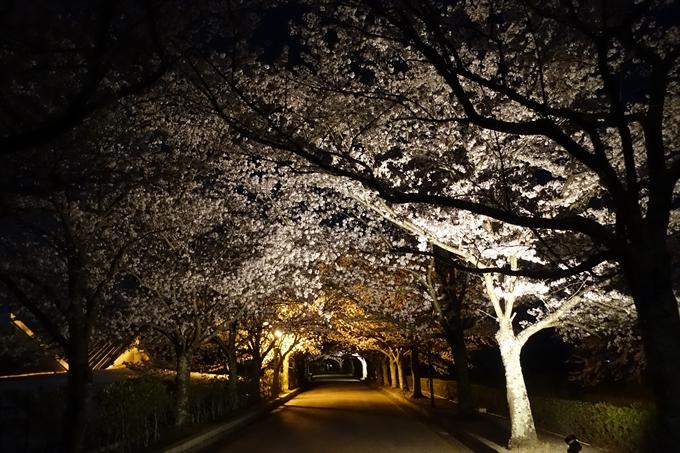 京都桜速報2018_20 No39