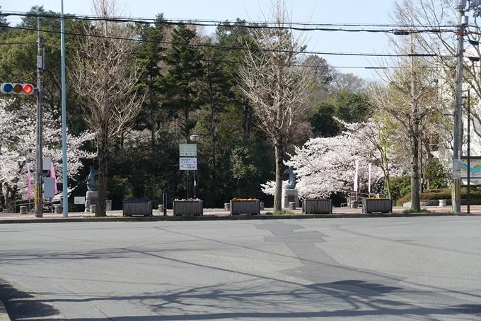 京都桜速報2018_15 No2