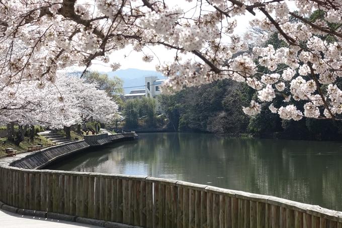 京都桜速報2018_15 No6