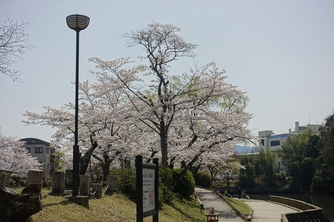 京都桜速報2018_15 No10