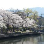 京都桜速報2018 その15 亀岡市 南郷公園