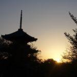 吉田山の新緑と真如堂の桜 桜まだ咲いてます