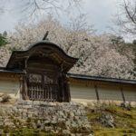 京都桜速報2018 その23 常照皇寺・大野ダムさくら祭