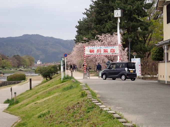 京都桜速報2018_1_20 No3