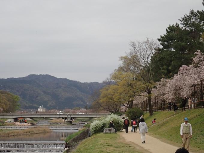 京都桜速報2018_1_20 No14