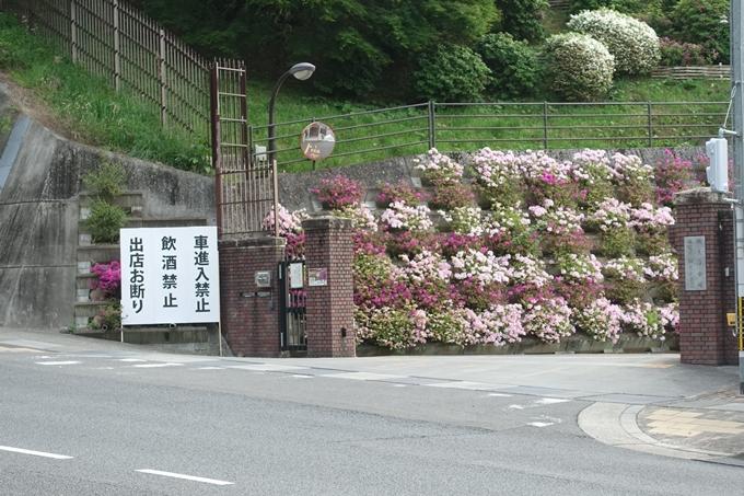 蹴上のつつじ02 No6