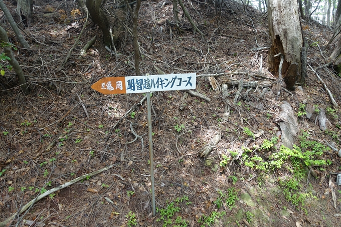 明智越え02 No36