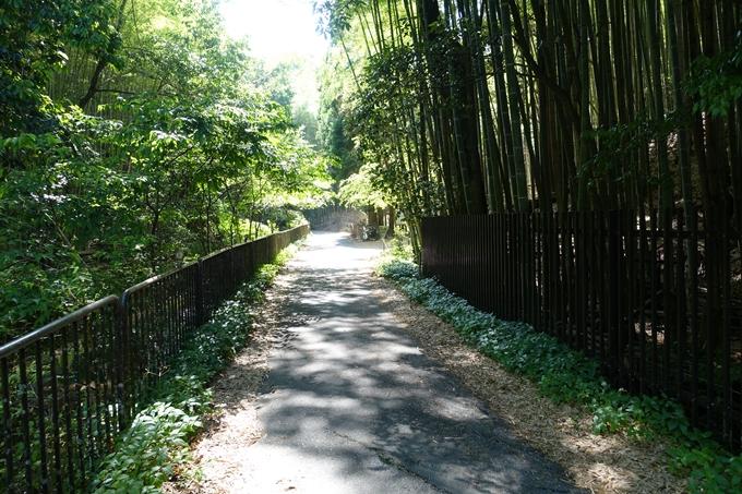 京都一周トレイル_西山 No16